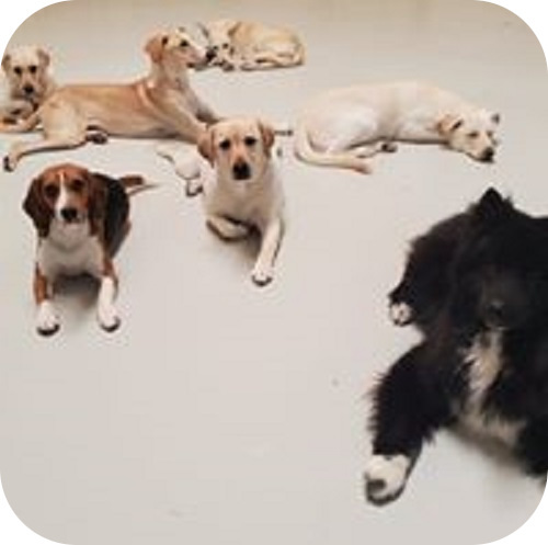 romishome-dogsboarding-gallery-five